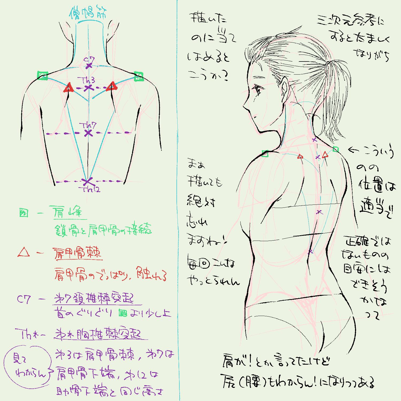 肩甲骨とかその周辺のお勉強の続き