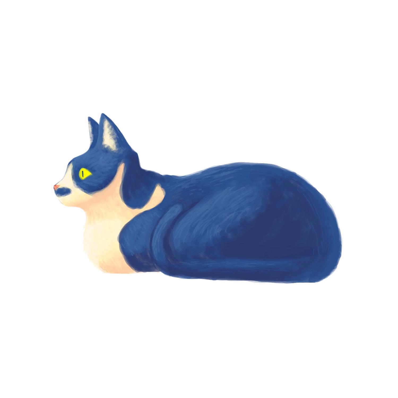 メスの猫3号