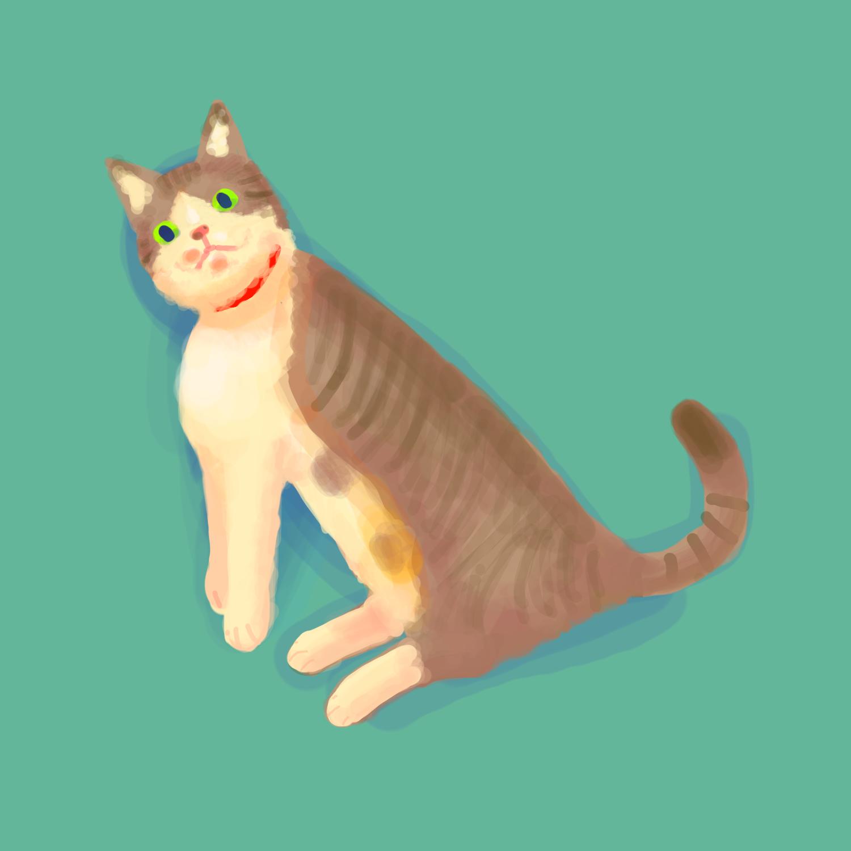 絶望顔の猫1号