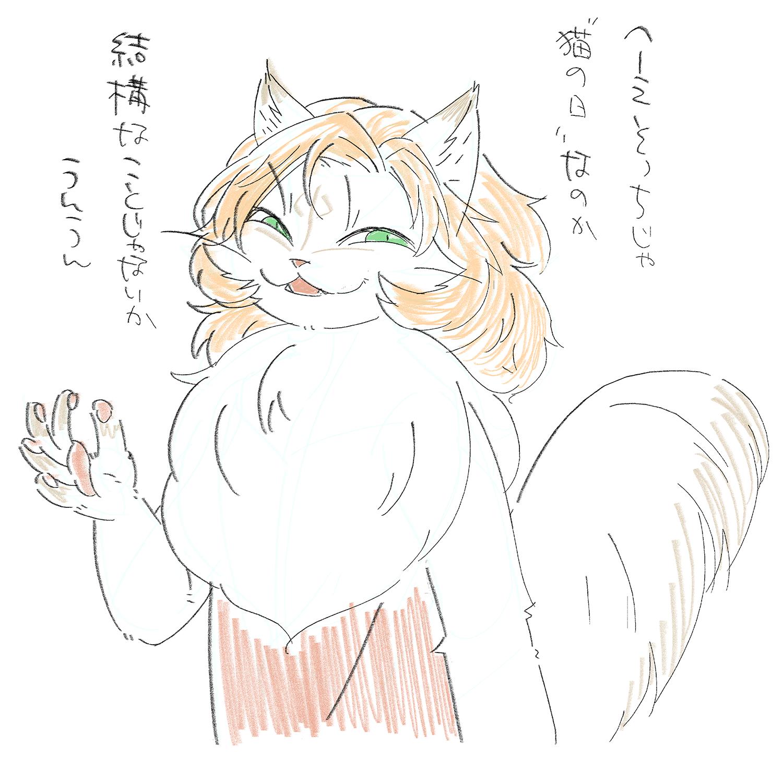 猫の日に期待する猫